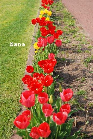 flower1-6_20160509203634637.jpg