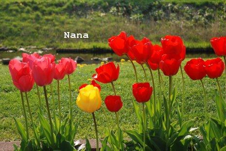 flower1-7_20160509203636a64.jpg