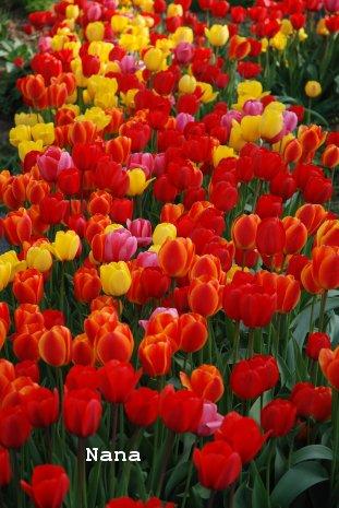 flower1-8_201605092036544bd.jpg
