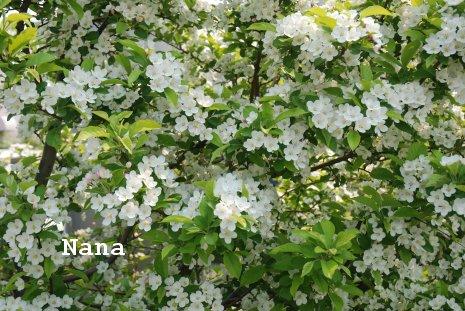 flower1-9_2016052022462761e.jpg