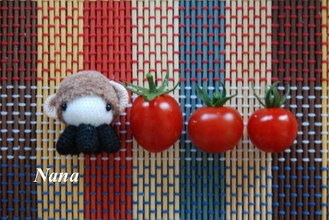 tomato1-1.jpg