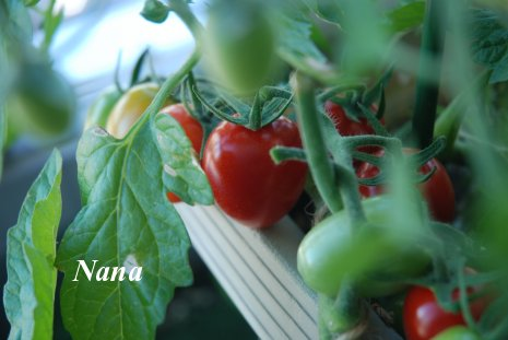 tomato1-2.jpg