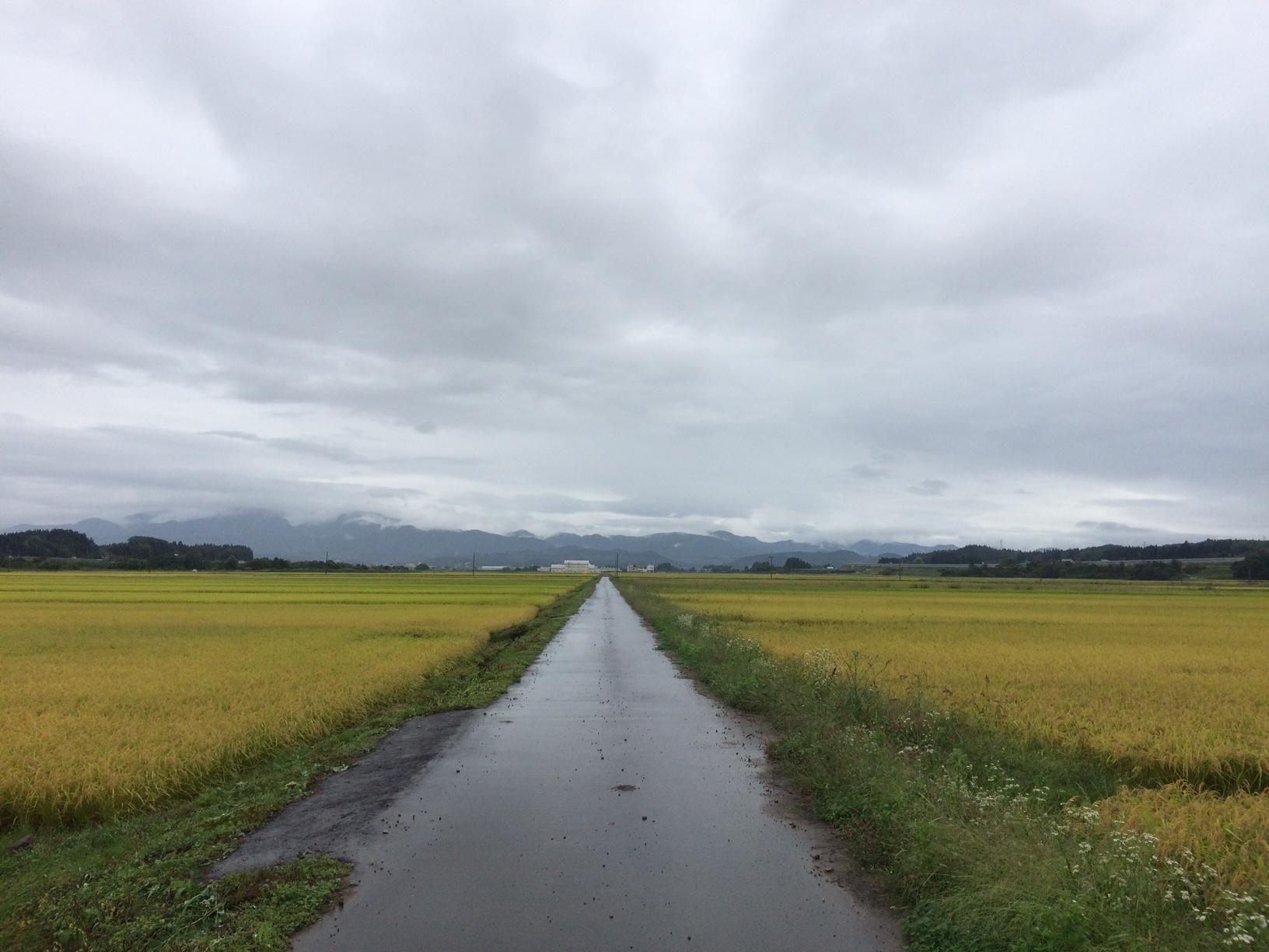 2-3 田中の道
