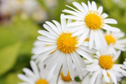 野の花だってきれい