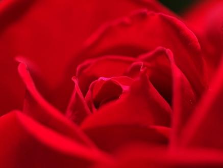 赤いバラは強いイメージ