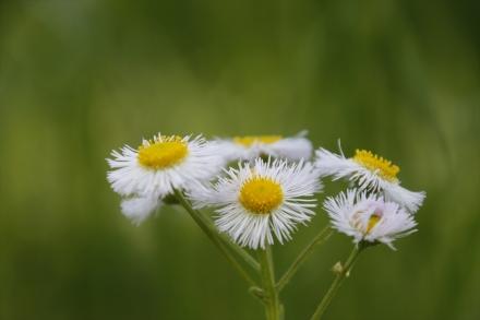 野の花もかわいい