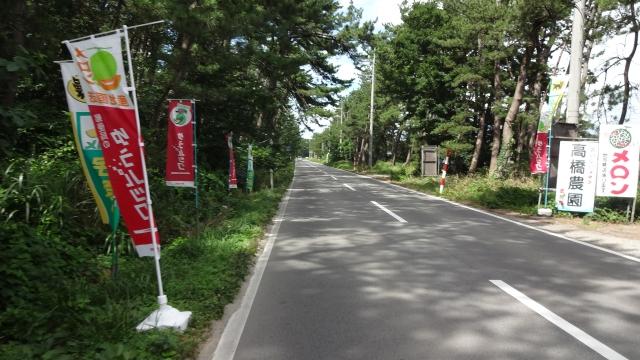 庄内空港近くの防風林