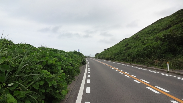 草茂る海岸道路