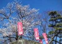 uedasakura04166