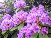 flowersjune167