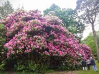 flowersjune168
