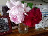 gardenroses06162