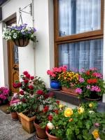 gardenroses06166