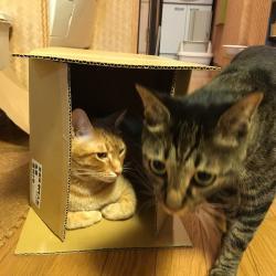 箱争奪戦2☆