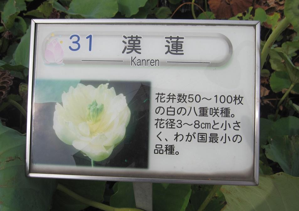 kanren_2.jpg