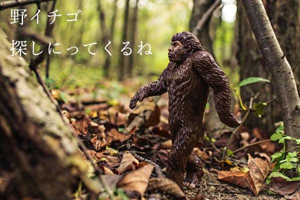 20160730_10.jpg