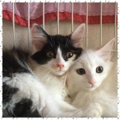 ベル&ユキ