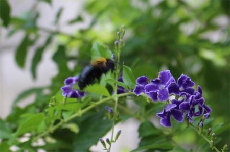 蝶々 001a