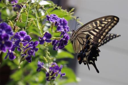 蝶々 013a