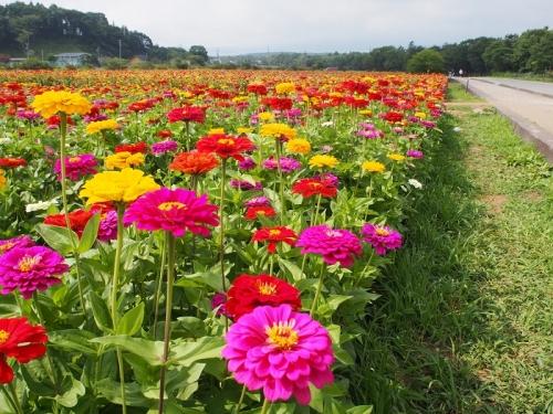 花の都8月(2)