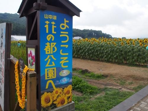 花の都8月(1)