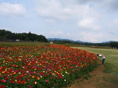 花の都8月(28)
