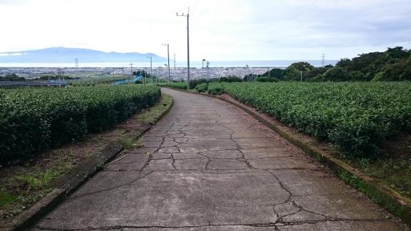 上島珈琲(15)