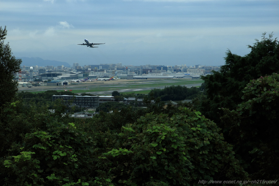 CAL A330-300@福岡空港南東部某所