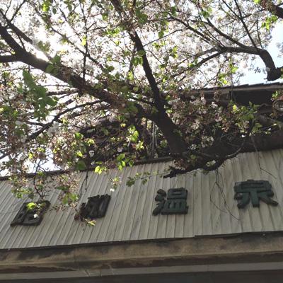 とっても綺麗な桜と日差し