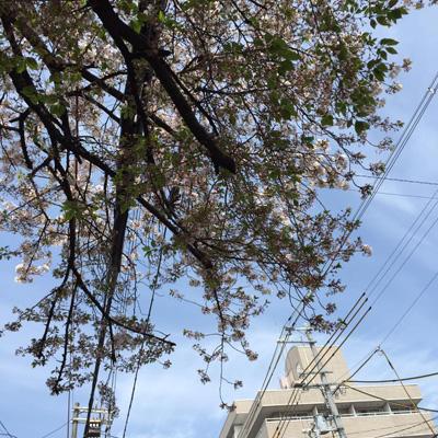 美しい空と桜
