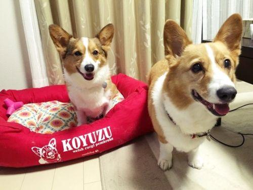 koyuzubed12.jpg