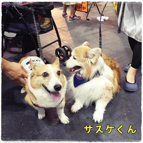 sasuke117p.jpg