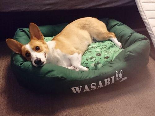 wasabi885.jpg