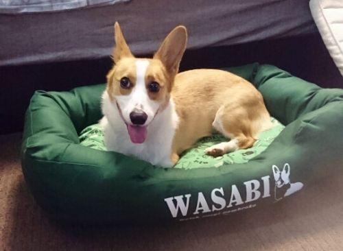 wasabi889.jpg