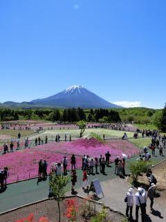 芝桜祭り2