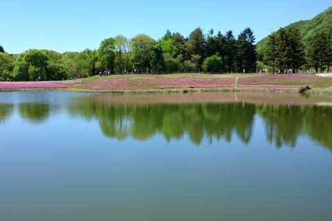 芝桜祭り3