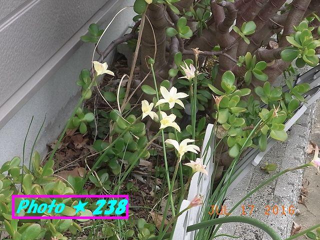 名も知らぬ黄色い花