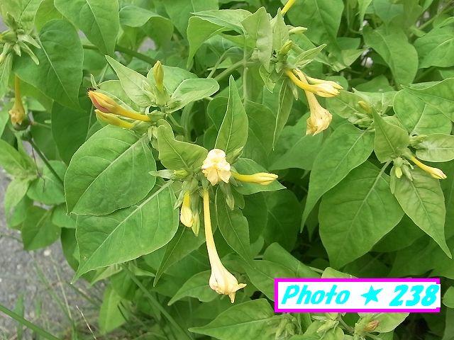 黄色のお白い花