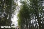 竹林(1)