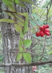 木の実(2)