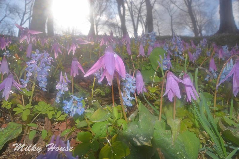 16winter_spring17.jpg