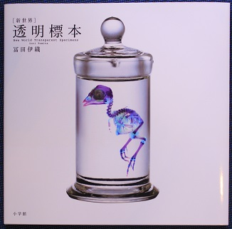 New World Transparent Specimens