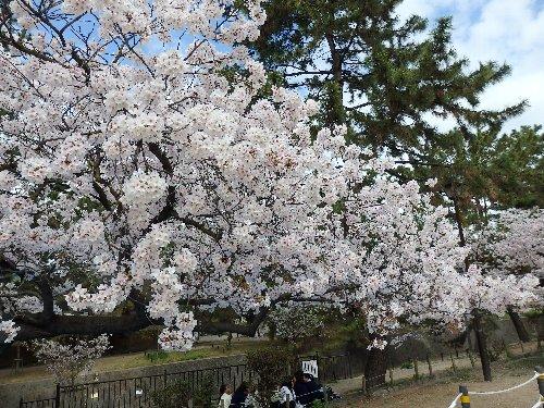 2016・04・05夙川5.