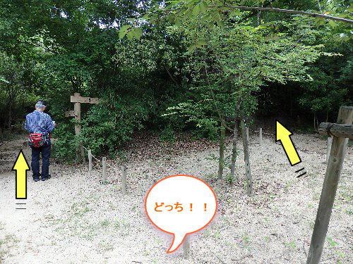 2016・06・04北山植物園6.