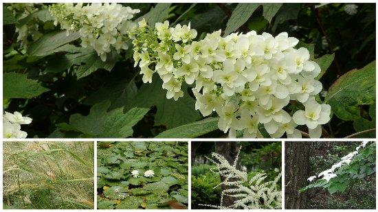 2016・06・04北山緑化植物園2a