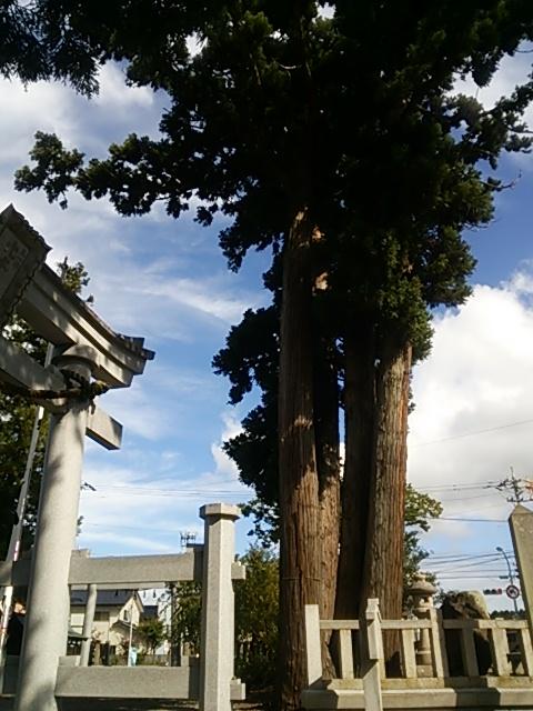 大宮巨木鳥