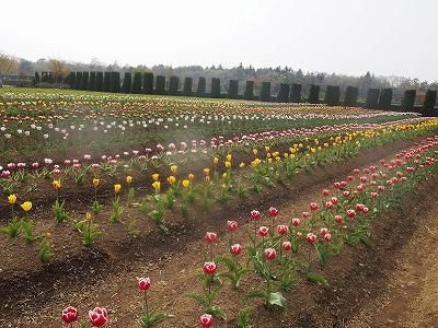 s-お花畑2