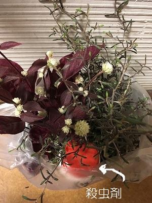 s-購入花