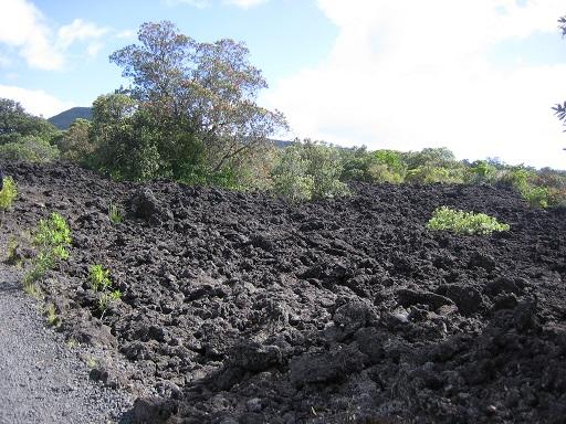 ニュージーランド・ランギトト島-5