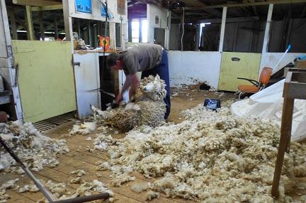 ニュージーランドの羊商品-1